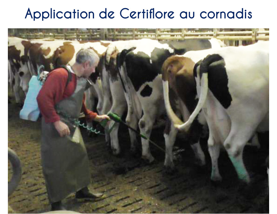Application de Certiflore au cornadis
