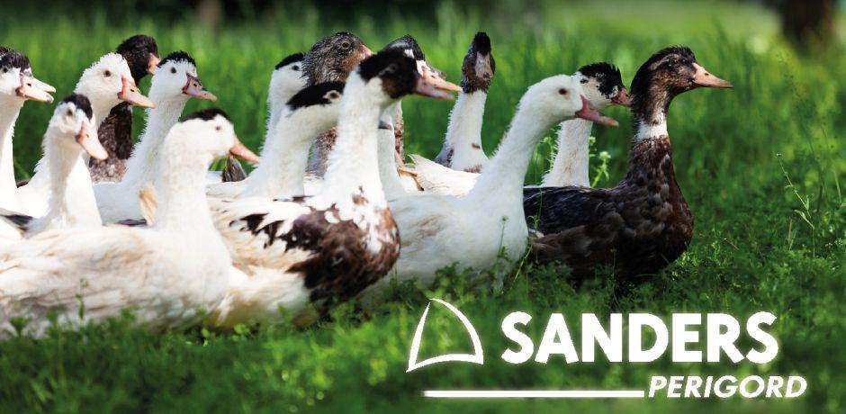 Eleveur de canards : école de gavage Sanders